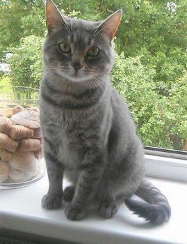 Sõbralik triibuline isane kass otsib kodu. Kastreeritud ja kiibitud. Kontakt: 53020504