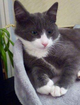 Jaanuaris 2019 kadus Tallinnas Raudalu piirkonnas noor isane kass Hallik.