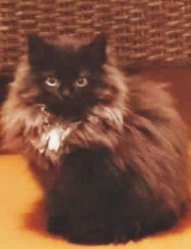 16.04 kadus Tallinnas Lasnamäel Kihnu tänaval 6-kuune kassitüdruk. Leidjale vaevatasu!