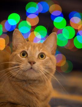 Tõnismäel kadunud punane isane kastreeritud kass. Kontakt: 58178624