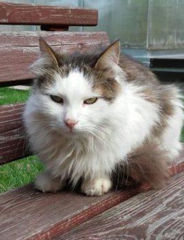 Hüljatud leebe iseloomuga isane kastreeritud kass otsib endale hoiukodu/päriskodu.  Kontakt 55659598