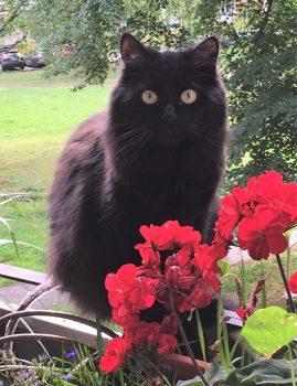 Mustamäel kadus 20. septembril 2019 emane kolmeaastane kass. Kontakt: 58365823